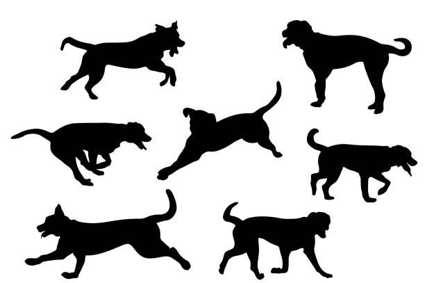 Bermese Mountain Dog vector art illustration