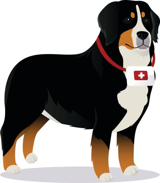 Bernes Mountain dog lifesaver vector art illustration