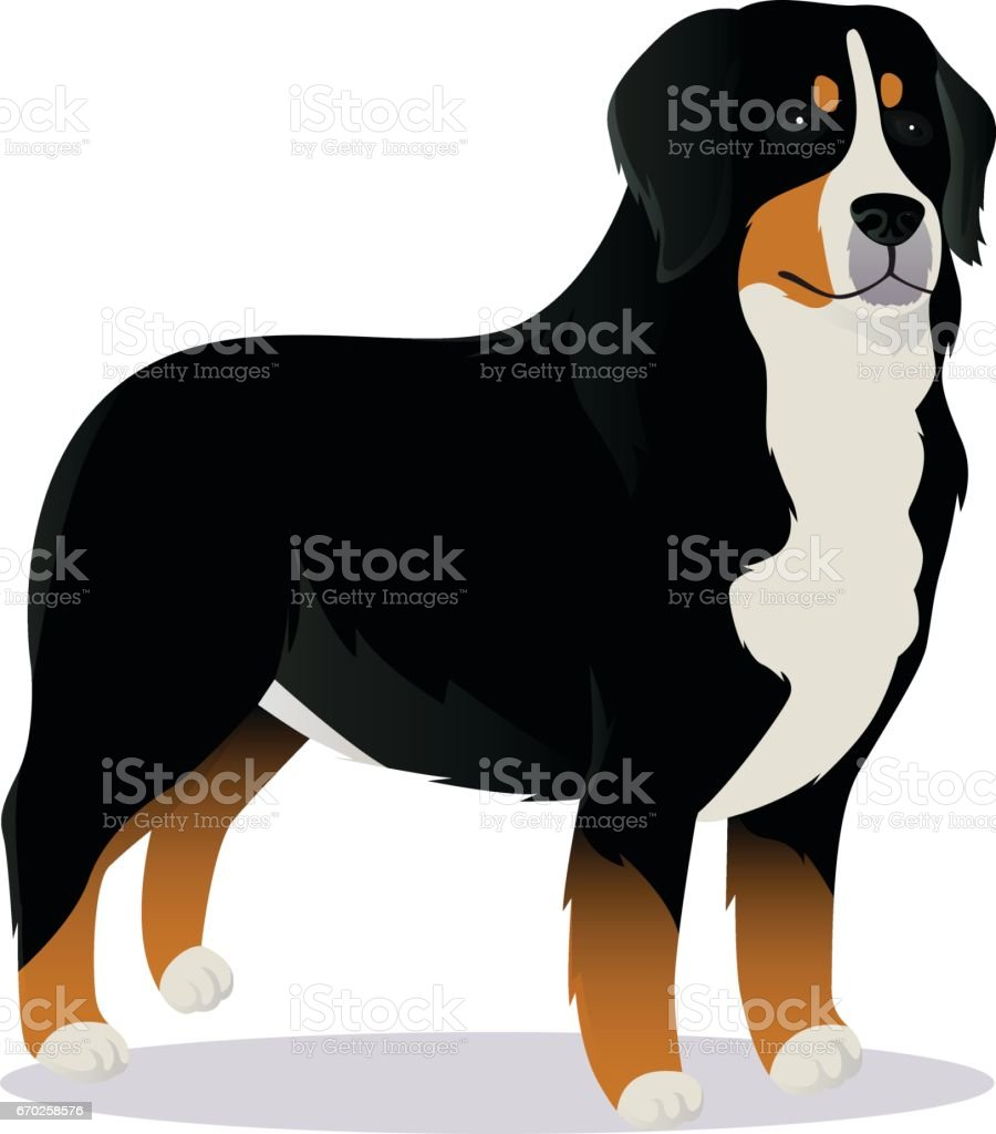 royalty free bernese mountain dog clip art vector images rh istockphoto com dog vector art for glass etching dog vector graphic