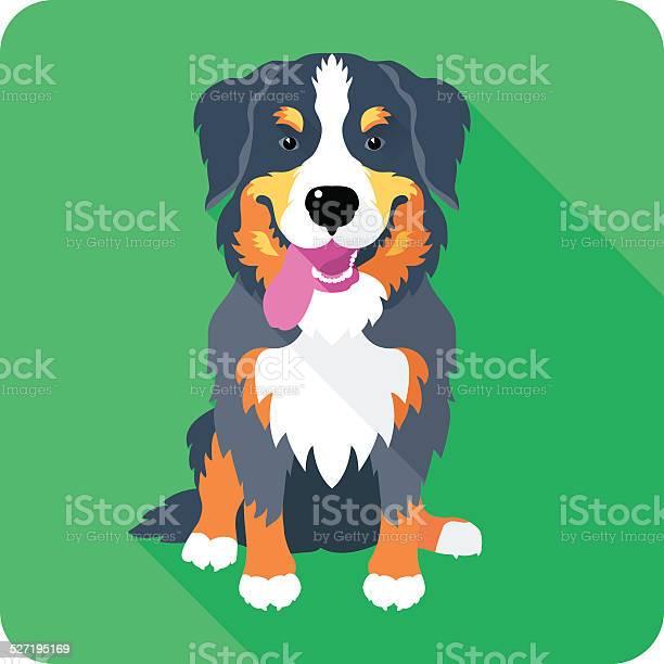 Bernese mountain dog dog icon flat design vector id527195169?b=1&k=6&m=527195169&s=612x612&h=nuaodnzvywtgrq9aov6 unrs8rxqsjvanbmgnaktoeq=