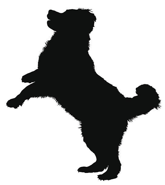 Bernese Mountain Dog vector art illustration