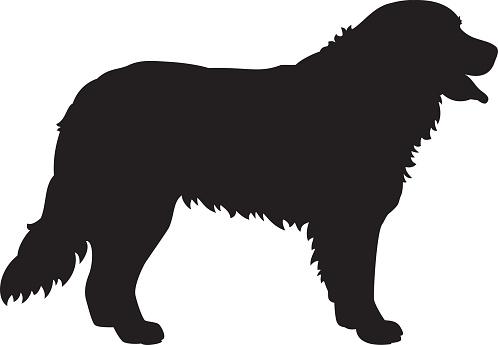 Bernese Mountain Dog Vector Silhouette