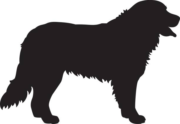 Silhouette Clipart Black And White Bernise Mountain Dog