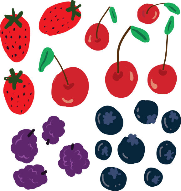 Berries and cherries vector drawing Strawberries cherries blackberries blueberries hand drawn vector kathrynsk stock illustrations