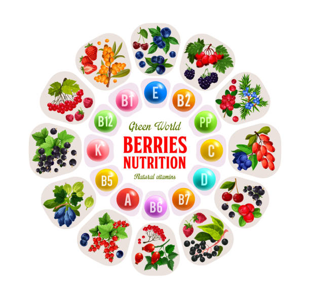 Berries and fruits rich of vitamins and minerals Vitamins in berries, nutrition benefits of strawberry, cherry and blueberry, raspberry, currant and blackberry, honeysuckle and cowberry, buckthorn, rowanberry and barberry fruits. Healthy food vector honeysuckle stock illustrations