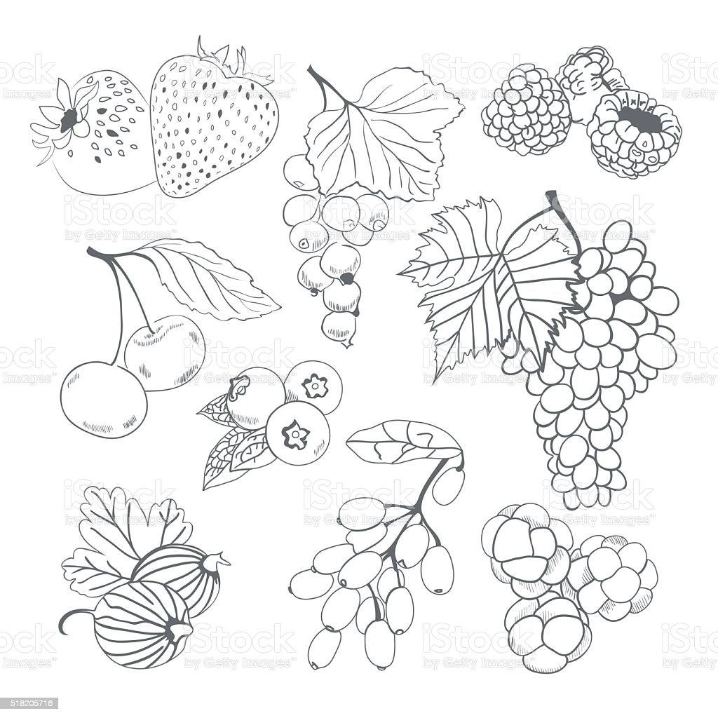 Frutti di bosco collezione per libro da colorare - Contorno di immagini di frutta ...