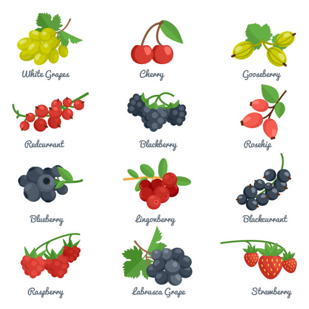 berries flat icon Berries flat icons set with grape cherry gooseberry blackberry isolated vector illustration berry fruit stock illustrations
