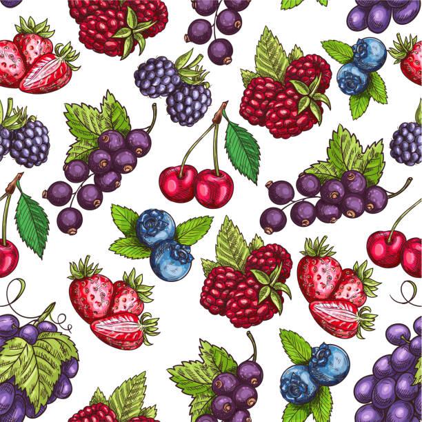 Berries fruits sketch seamless pattern vector art illustration