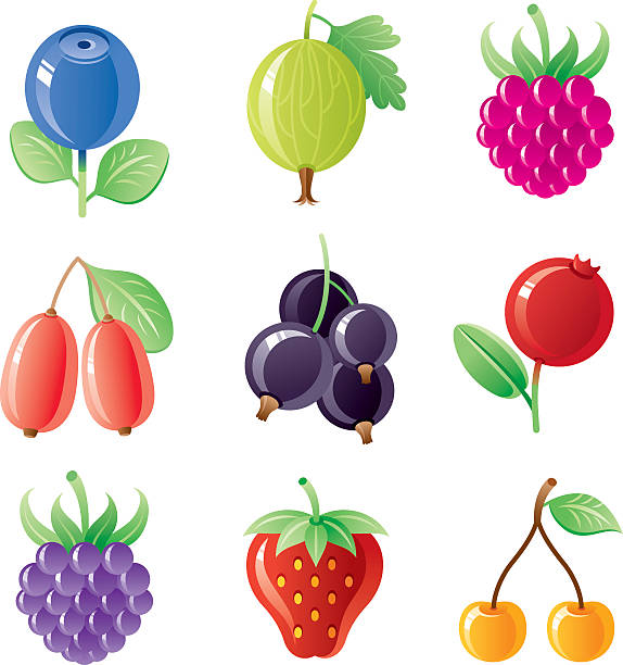 Berries icon set All berries in one set! 9 icons with blueberry, gooseberry, raspberry, barberry, black currant, cranberry, blackberry, strawberry, sweet yellow cherry. black currant stock illustrations