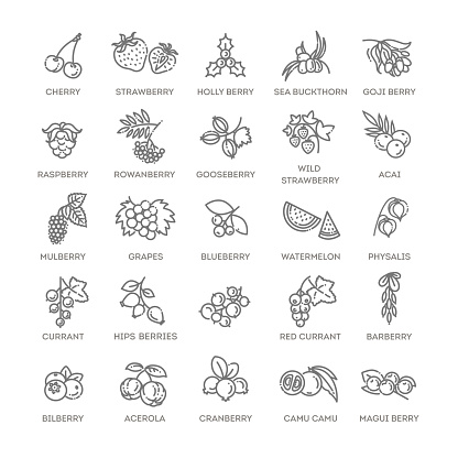Berries icon set. Vector illustration in modern flat style