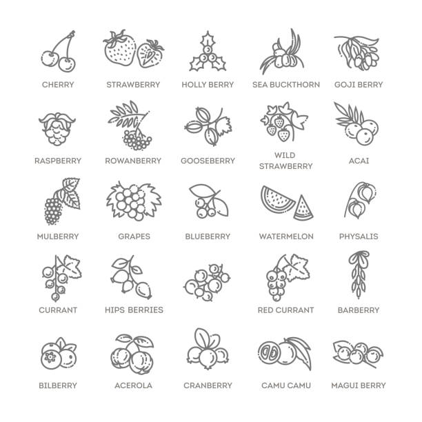 Berries icon set. Vector illustration in modern flat style Outline icons set in thin modern design style, flat line stroke vector symbols - berry collection berry fruit stock illustrations