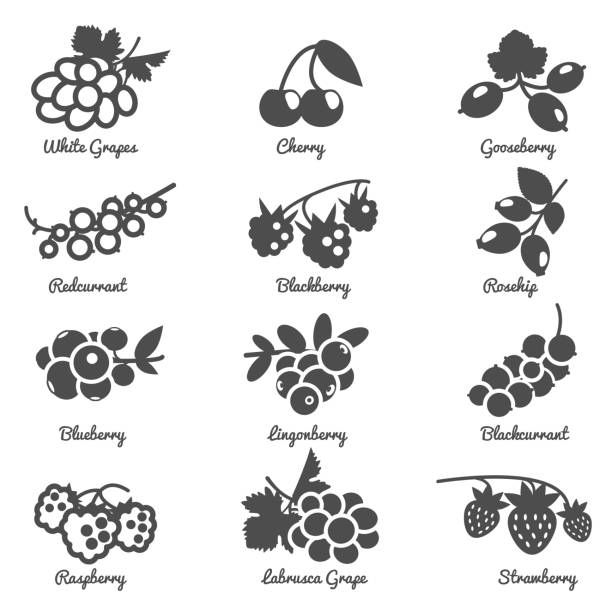 berries  icon Berries cherry grape currant rosehip and other silhouette flat symbol icon set isolated vector illustration black currant stock illustrations