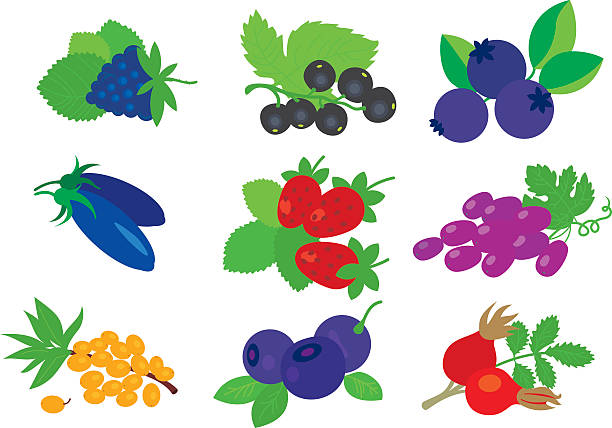 stockillustraties, clipart, cartoons en iconen met berries set. - wilde aardbei