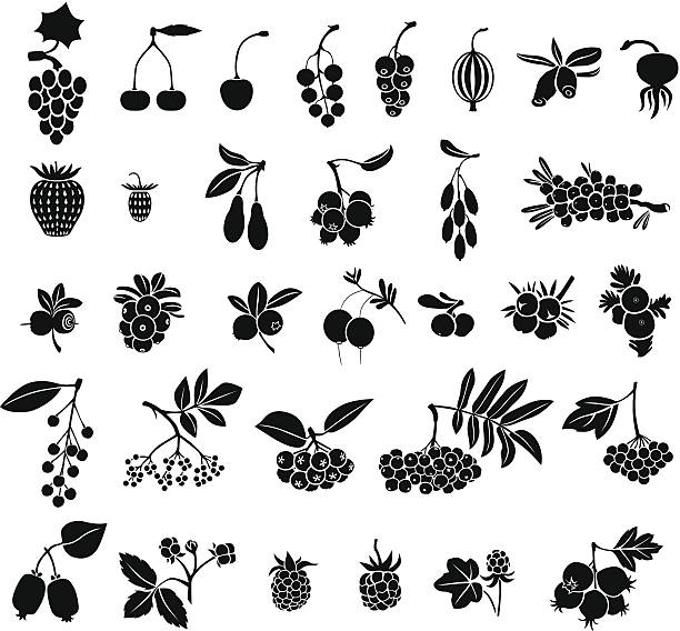 Berries set Silhouette black-and-white image of berries set black currant stock illustrations
