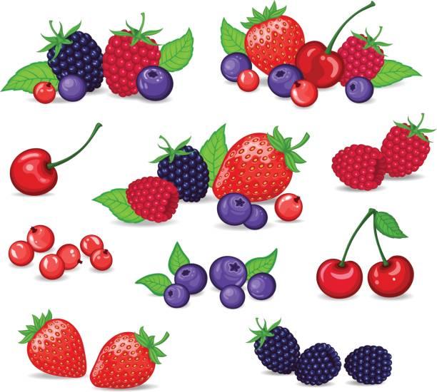 bildbanksillustrationer, clip art samt tecknat material och ikoner med bär in vektorillustration. jordgubb, björnbär, blåbär, körsbär, hallon, röda vinbär. bär och deras kombinationer inställd - bär
