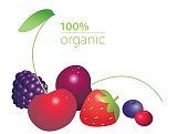 Berries set with 100 per cent organic lettering isolated on white background. Healthy ecological lifestyle concept.
