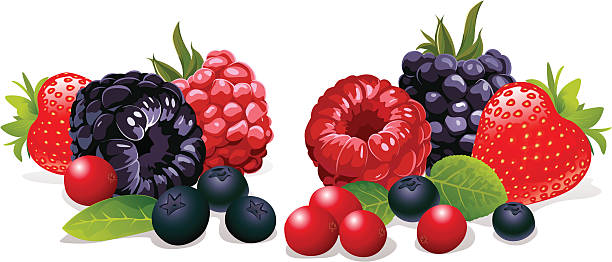 berries still life strawberry, raspberry, blackberry, cranberry and blueberry on white background berry fruit stock illustrations