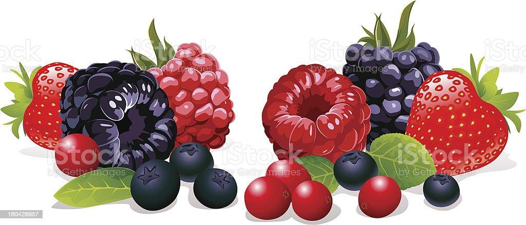 berries still life vector art illustration