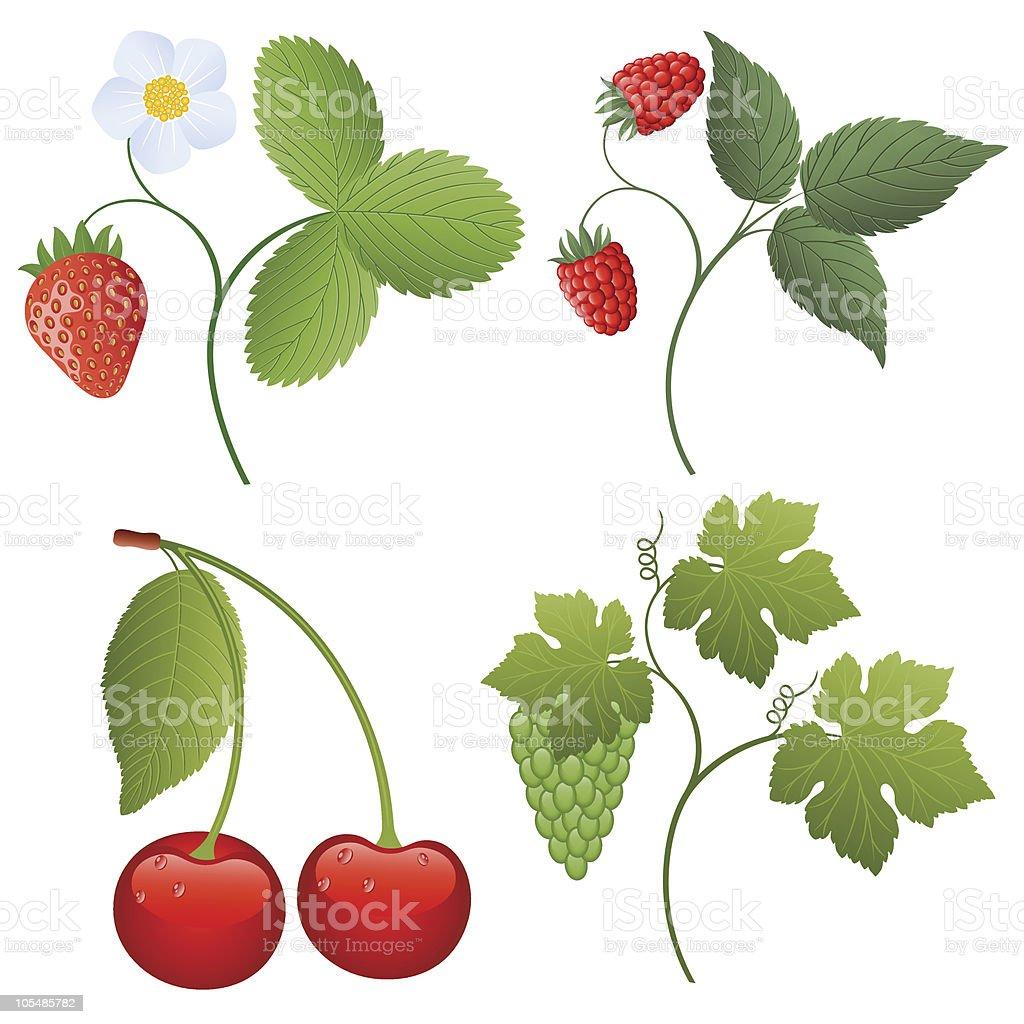 Berries royalty-free berries stock vector art & more images of berry fruit