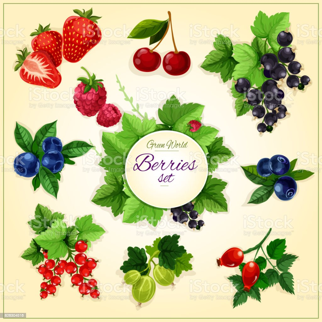Berry and fruit cartoon poster for food design vector art illustration