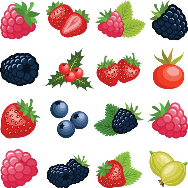 Berry fruit Berry fruit collection - vector color illustration berry fruit stock illustrations