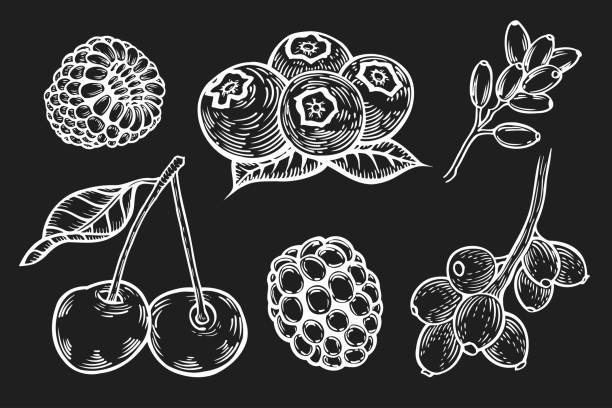 Berry Hand set. Hand drawn Berry vector set. Fruit botany illustration. Currant, raspberry, strawberry, blueberry, cherry on black background. Dessert ingredient. Berries engraving doodle sketch etch line. black currant stock illustrations
