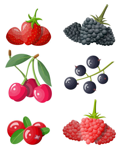 Berry icon set. Berry icon set. Cranberry, black currant, backberry, blueberry, red currant, raspberry, strawberry and cherry.Berries with green leaves. Organic healthy food. Vector illustration flat style black currant stock illustrations