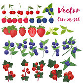 Berries Set Vector Illustration. Strawberry, Blackberry, Blueberry, Cherry, Raspberry, Red currant Berries and their Combinations Set