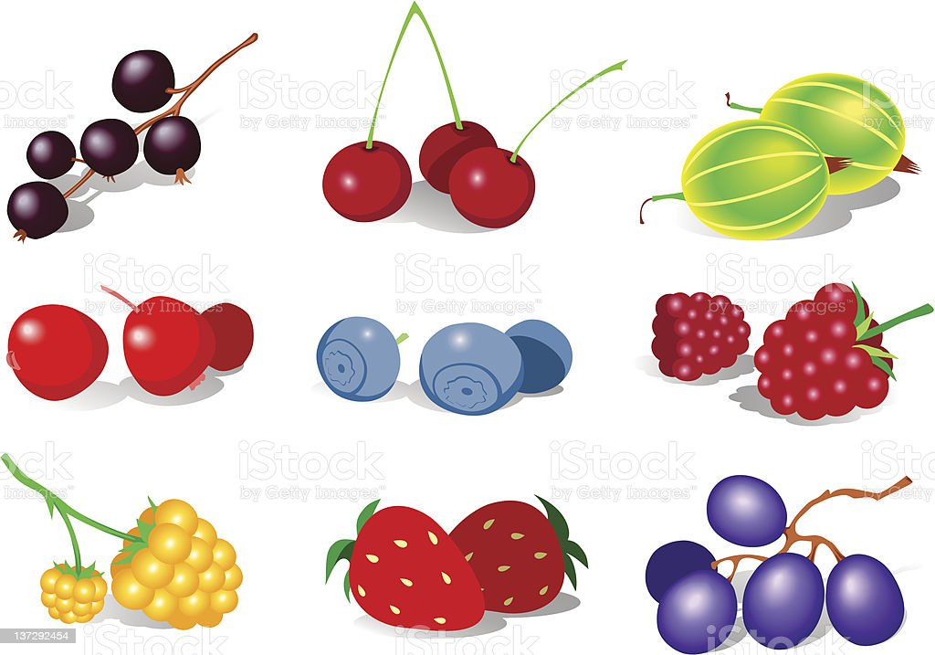 Berry royalty-free stock vector art