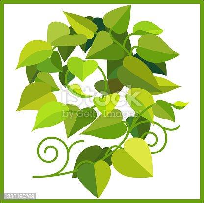 istock betel plant 1332190269