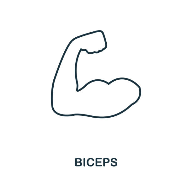 Biceps outline icon. Simple element illustration. Biceps icon in outline style design from sport equipment collection. Perfect for web design, apps, software, print. vector art illustration
