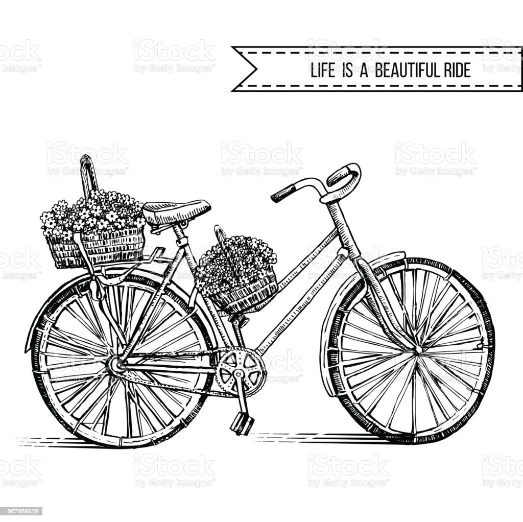 14190df017e Bicycle hand drawn vector sketch, ink illustration old bike with floral  basket isolated on white background, vintage decorative style for design  invitation, ...