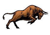 big aggressive muscle bull attacking