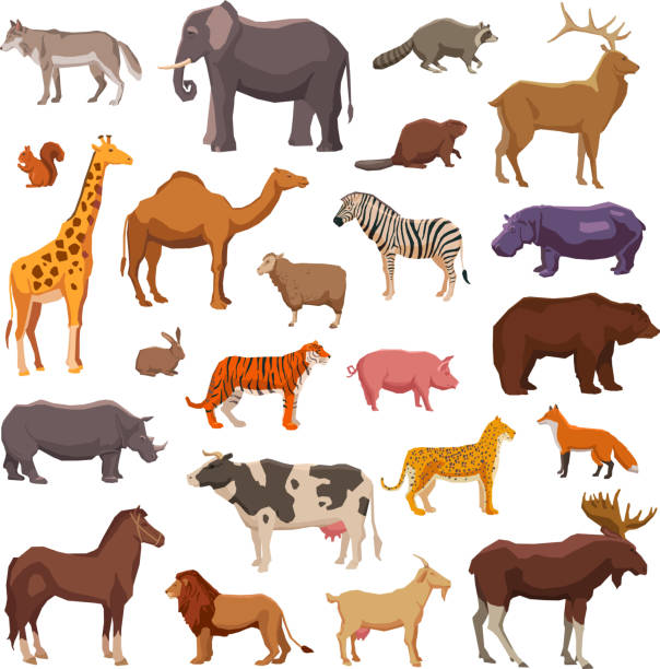big animals set Big wild domestic and farm animals decorative icons set isolated vector illustration animal stock illustrations
