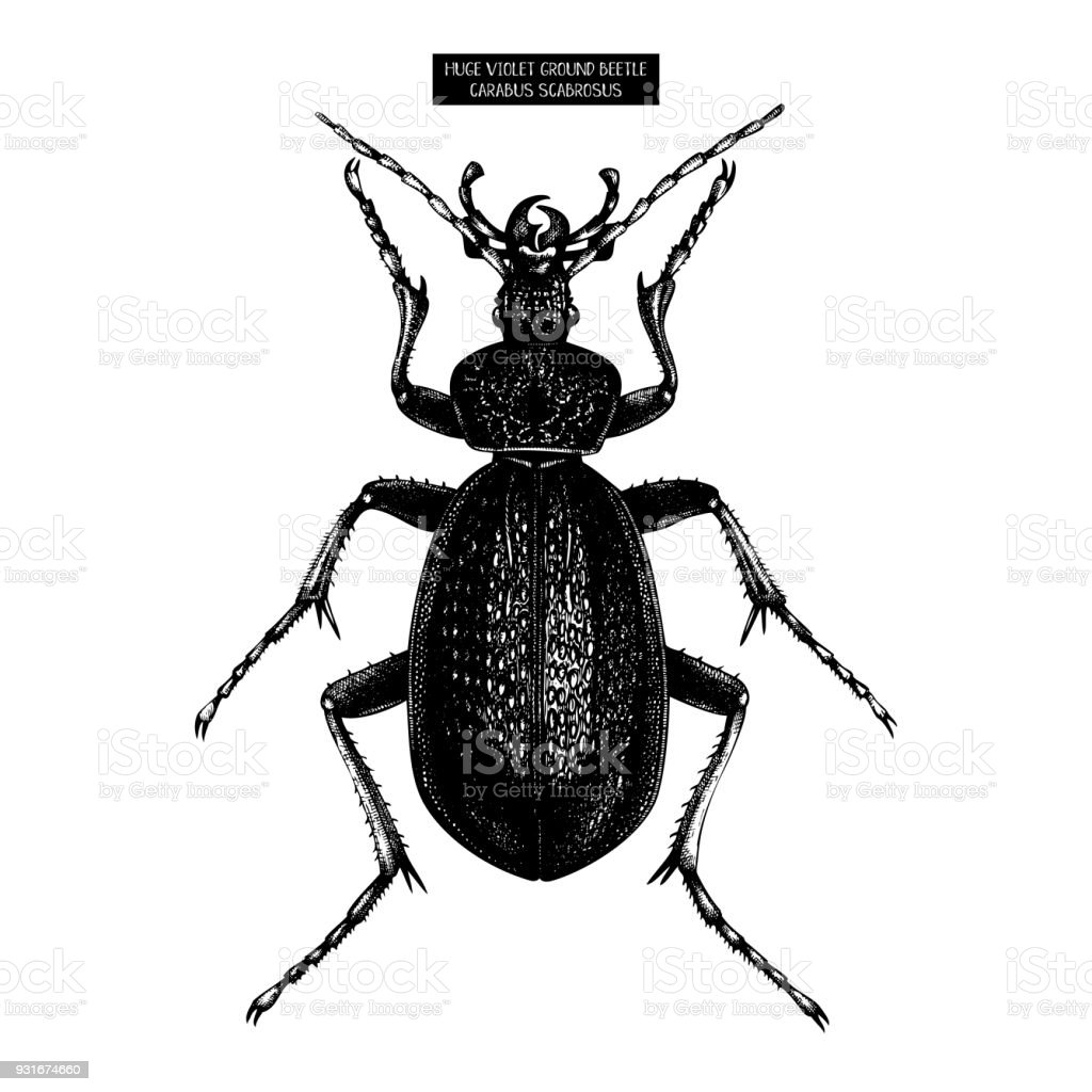 Ilustración de Gran Escarabajo Negro y más banco de imágenes de Aire ...