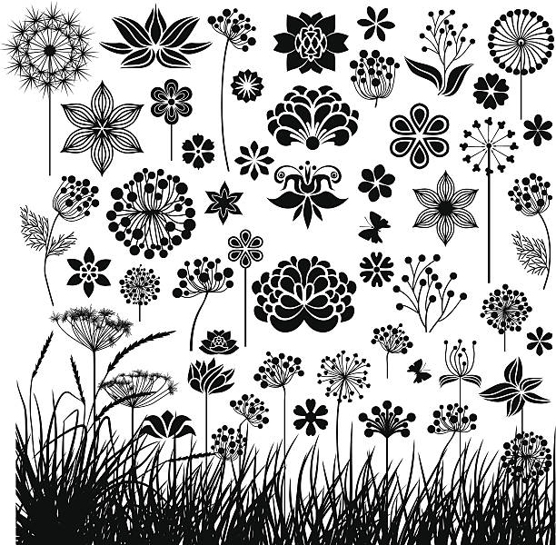 Big Botanik-set – Vektorgrafik