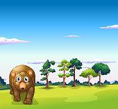 Big brown bear walking