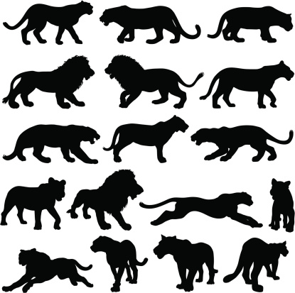 Silhouettes of big cats