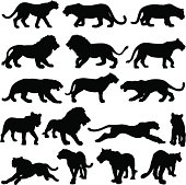 Big cat silhouette collection