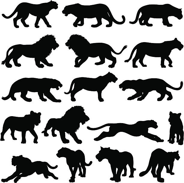 stockillustraties, clipart, cartoons en iconen met big cat silhouette collection - tijger