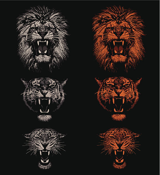 big cats - lion stock illustrations, clip art, cartoons, & icons