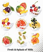 Big collection icons of fruit in a milk splash. Guava, plum, mango, blackcurrant, strawberry, cherry, blueberry, honey, melon, peach. Vector Set
