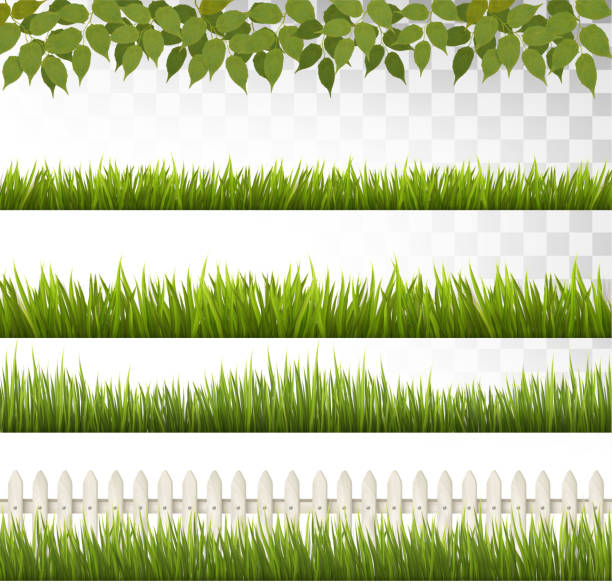 big collection of green grass and french. vector. - grass stock illustrations