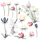 Big collection of peony and field flowers for design