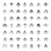 Big collection of roots tree. Vector Illustration.