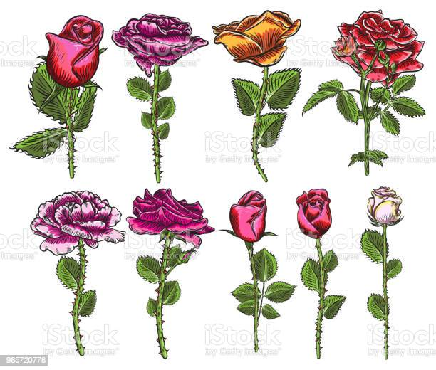 Big collection of roses and leafs for design set of highly detailed vector id965720778?b=1&k=6&m=965720778&s=612x612&h=hen5pk8olbjh9xzapteqjtv59xbg7aydfhhbfit0 we=