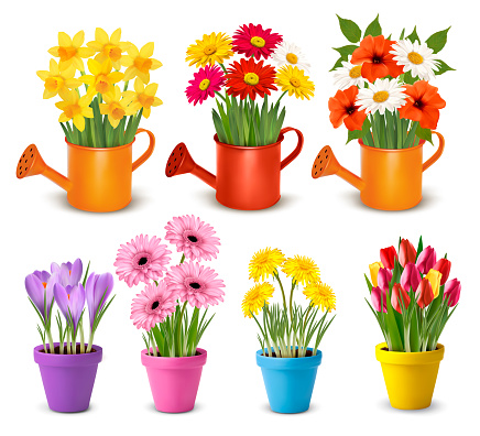 Big collection of spring and summer colorful flowers in pots.  Vector
