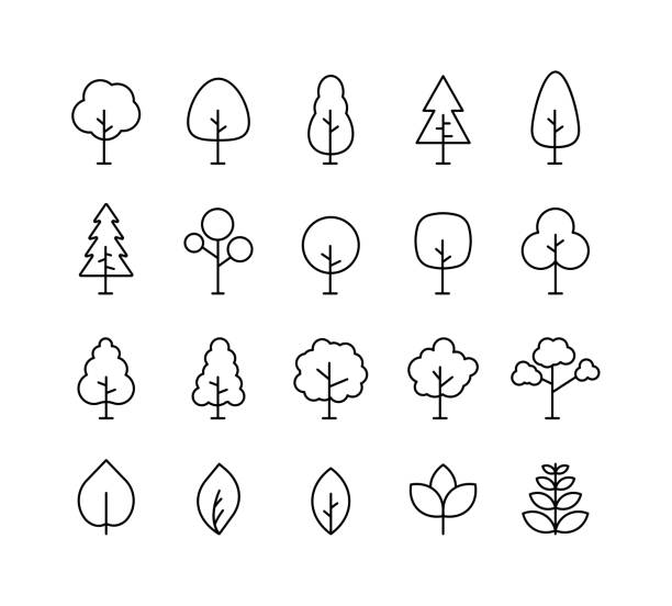 ilustraciones, imágenes clip art, dibujos animados e iconos de stock de árbol de colección grande. icono de línea de árbol. madera. planta. ilustración vectorial. - árbol