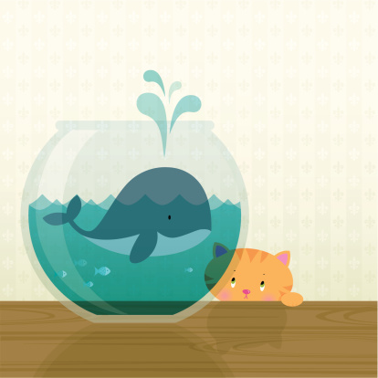 Big fish in a small pond