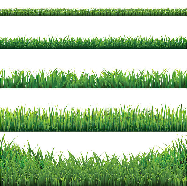 stockillustraties, clipart, cartoons en iconen met big grass borders set - grasspriet